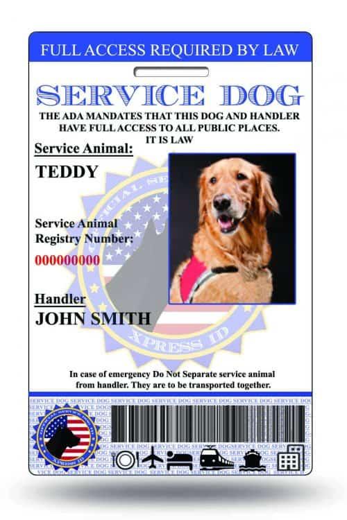 Service dog id 003