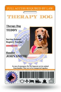 therapy dog id 003
